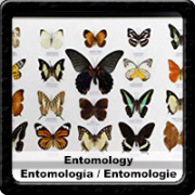 entomology  taxidermy negre